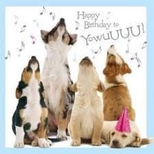 Image result for happy birthday  dog