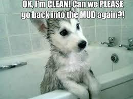 Dog memes, part 5: The good, the sad, and the funny - Dogtime via Relatably.com