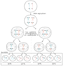 gene pairs biology homework homeotic genes article khan academy tes edu thesis amp essay simulation homework help professional writing image