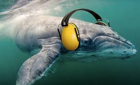 new silent oceans campaign raises awareness about oceanic noise silent oceans campaign raises awareness about oceanic noise pollution