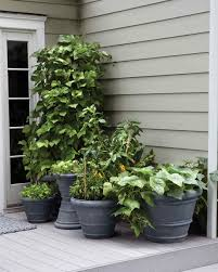 Small Picture Small Space Garden Ideas Martha Stewart