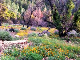 Image result for wildflowers