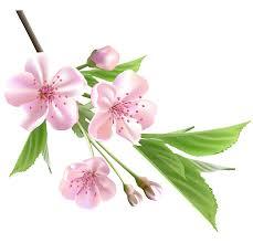 Image result for spring flower