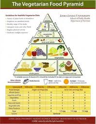 essay on food free food pyramid essays and papers   helpme free food pyramid essay   example essays