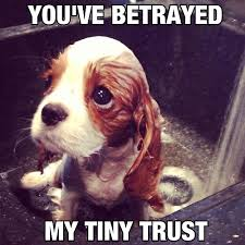 You have betrayed my tiny trust - Memes Comix Funny Pix via Relatably.com