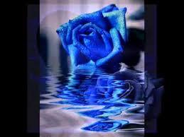 Resultado de imagem para rosas azuis