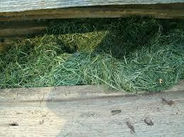 barn living quarters conrad