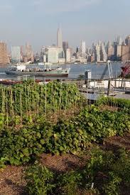 roof top urban kitchen garden: rooftop urban farmer brooklyn  rooftop urban farmer brooklyn