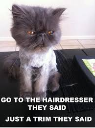 Just A Trim cat Meme | Slapcaption.com | Funny Cats and Memes ... via Relatably.com