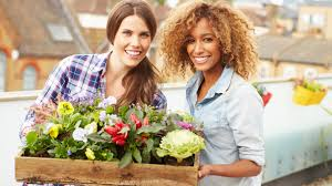 Image result for the benefits of ornamental plants at home
