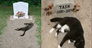 Research Shows That Cats Grieve For Lost Companians Just Like We ... via Relatably.com