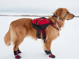 Best <b>Dog</b> Boots for <b>Winter</b> & Cold Weather – American Kennel Club