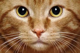 """Résultat de recherche d'images pour """"moustache d'un chat"""""""