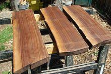 black walnut wood showing the color and grain black walnut tree trunk