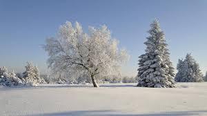 Bildergebnis für kälte