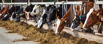 Премиксы для КРС: <b>кормовые добавки</b> для <b>коров</b> - ШАУМАНН