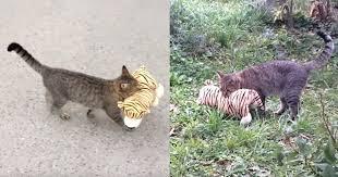 Viral Video of a Cat <b>Walking</b> With a <b>Stuffed</b> Animal | POPSUGAR Pets