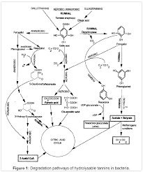 isolation and characterization of tannic acid hydrolysing bacteria biochemistry analytical biochemistry degradation