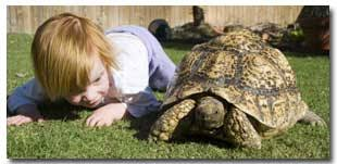 Image result for head less tortoise