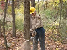 Image result for TREE DOWN