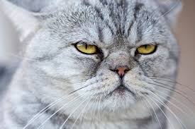 What Do <b>Cats</b> Think About Us? You May Be Surprised