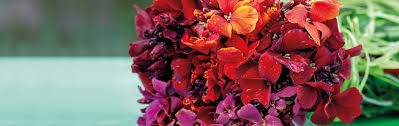 Buy <b>Wallflower</b> Plants & Seedlings | Sarah Raven