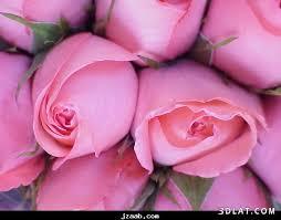 احلى صور باللون الزهري images?q=tbn:ANd9GcT