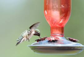 13 Questions About Hummingbird <b>Feeders</b> Answered by Experts ...