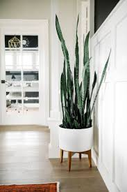 room plants x: snake plant in west elm planter one room challenge