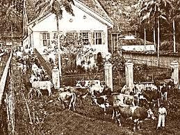 Resultado de imagem para trabalho escravo em fazendas de gado