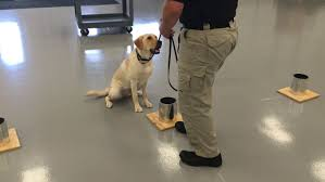 s top dog training tips central intelligence agency