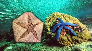 <b>Морские звезды</b> - YouTube