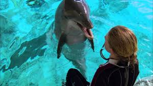 Super Smart <b>Dolphin</b> Answers Questions | Extraordinary Animals ...